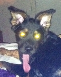 Daphne - the Devil Dog